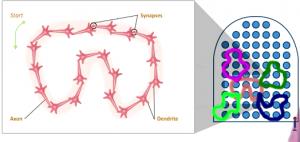 neurons-firing-together