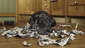 dog-eat-paper_931718e438431c1e